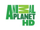 Animal Planet HD hol vehető?